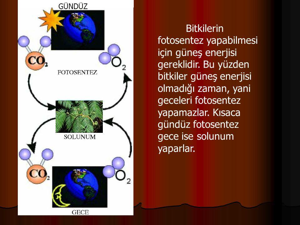 Bitkilerin fotosentez yapabilmesi için güneş enerjisi gereklidir. Bu yüzden bitkiler güneş enerjisi olmadığı zaman, yani geceleri fotosentez yapamazla