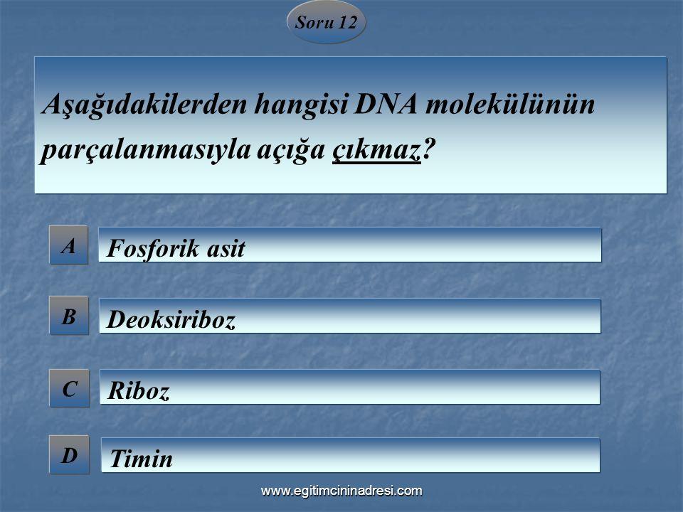 Soru 12 A B C D Aşağıdakilerden hangisi DNA molekülünün parçalanmasıyla açığa çıkmaz? Fosforik asit Deoksiriboz Riboz Timin www.egitimcininadresi.com