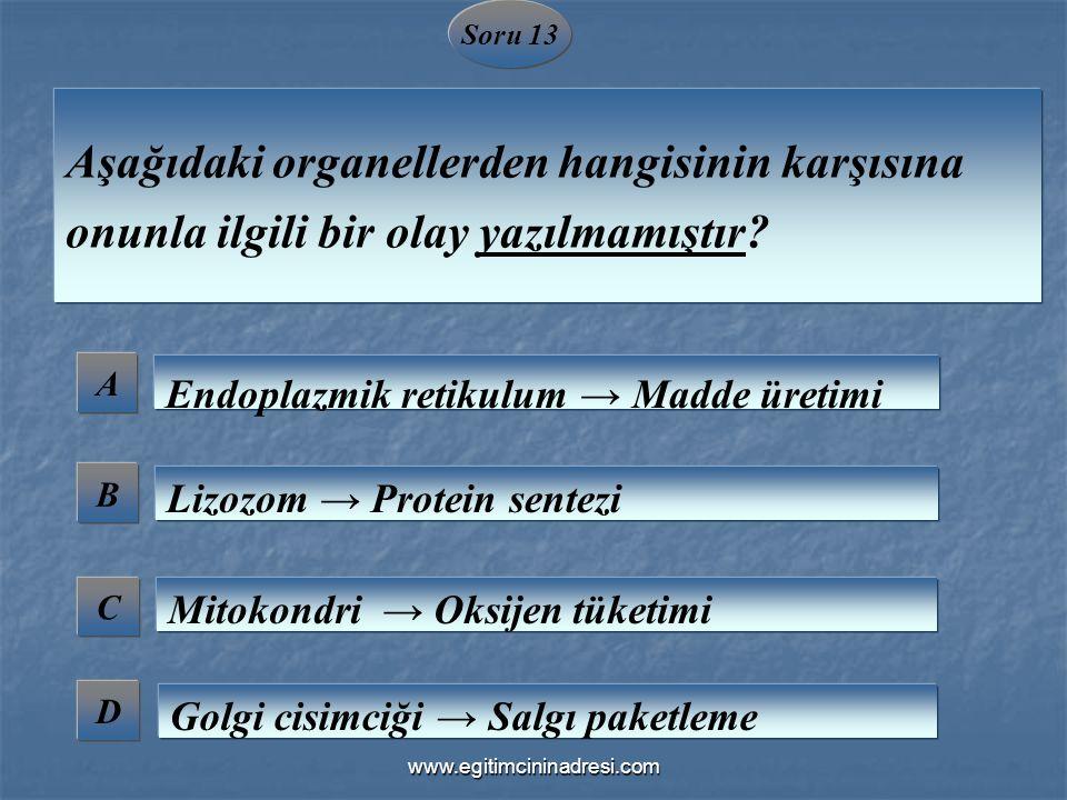 Soru 13 A B C D Aşağıdaki organellerden hangisinin karşısına onunla ilgili bir olay yazılmamıştır? Endoplazmik retikulum → Madde üretimi Lizozom → Pro