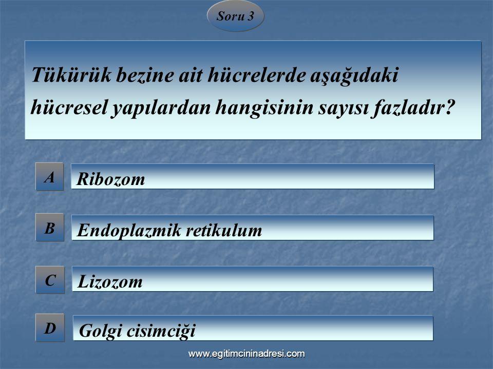 Soru 3 A B C D Tükürük bezine ait hücrelerde aşağıdaki hücresel yapılardan hangisinin sayısı fazladır? Ribozom Endoplazmik retikulum Lizozom Golgi cis
