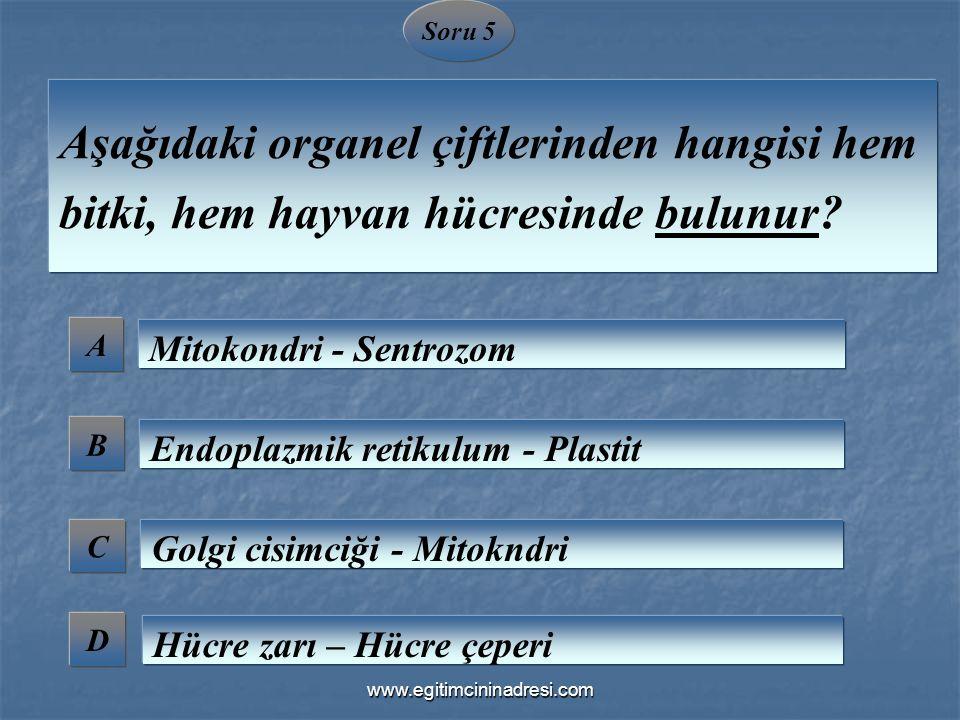 Soru 5 A B C D Aşağıdaki organel çiftlerinden hangisi hem bitki, hem hayvan hücresinde bulunur? Mitokondri - Sentrozom Endoplazmik retikulum - Plastit
