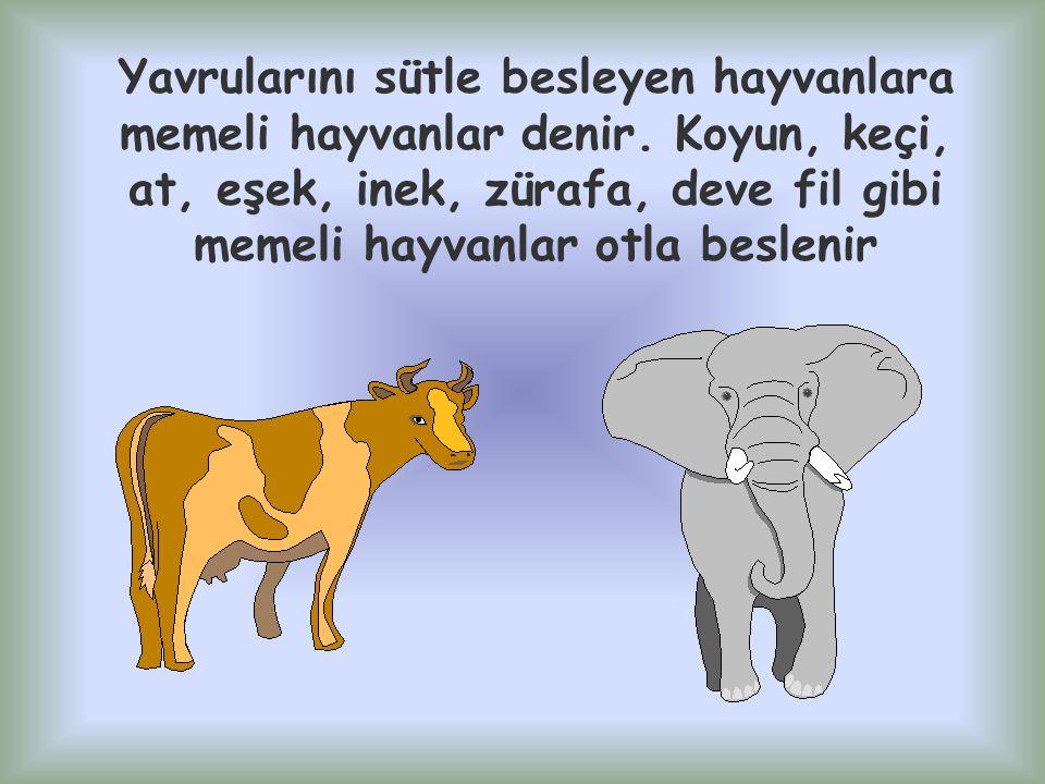 Yavrularını sütle besleyen hayvanlara memeli hayvanlar denir. Koyun, keçi, at, eşek, inek, zürafa, deve fil gibi memeli hayvanlar otla beslenir