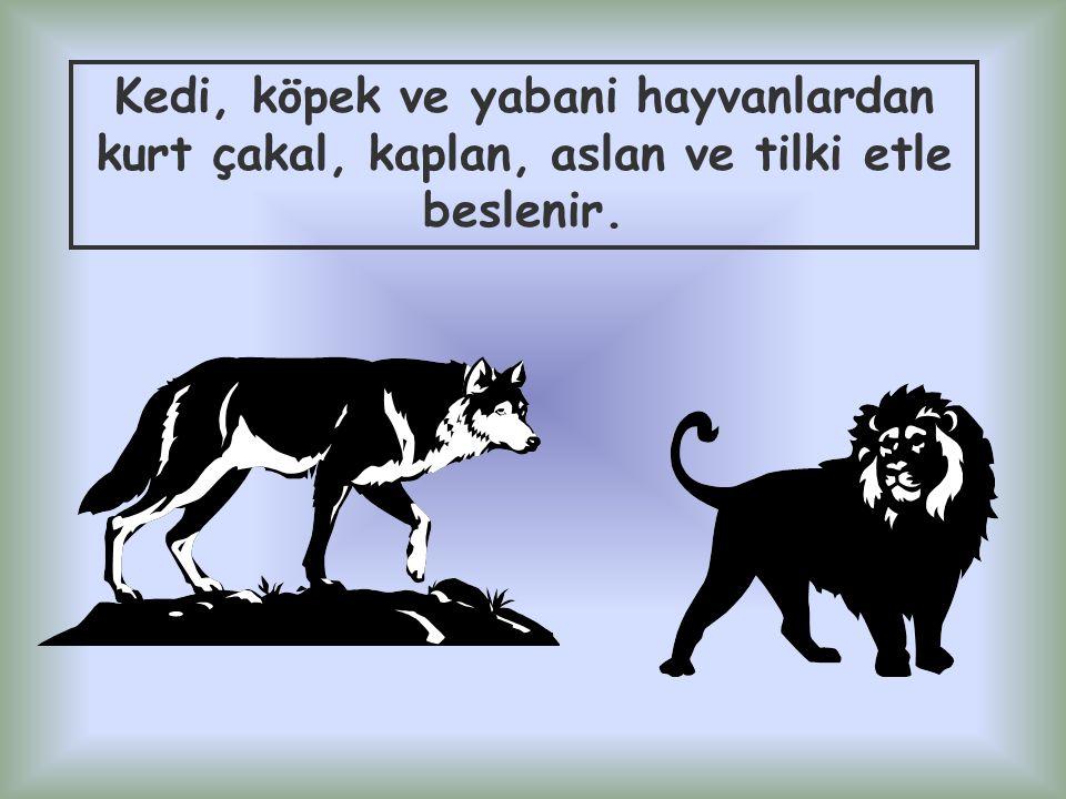 Kedi, köpek ve yabani hayvanlardan kurt çakal, kaplan, aslan ve tilki etle beslenir.
