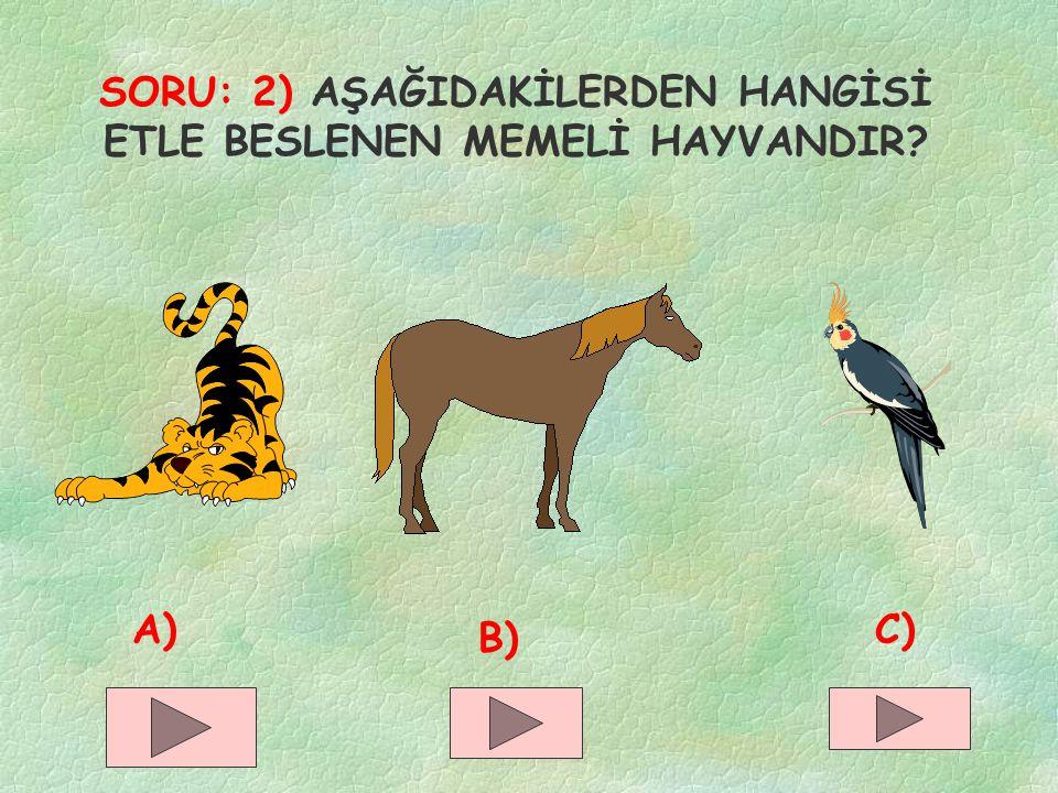 SORU: 2) AŞAĞIDAKİLERDEN HANGİSİ ETLE BESLENEN MEMELİ HAYVANDIR? A) B) C)