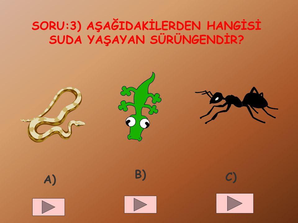 SORU:3) AŞAĞIDAKİLERDEN HANGİSİ SUDA YAŞAYAN SÜRÜNGENDİR? A) B) C)