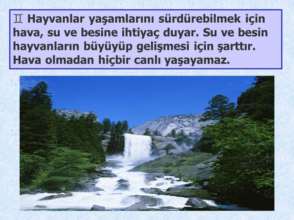 ` Hayvanlar yaşamlarını sürdürebilmek için hava, su ve besine ihtiyaç duyar. Su ve besin hayvanların büyüyüp gelişmesi için şarttır. Hava olmadan hiçb