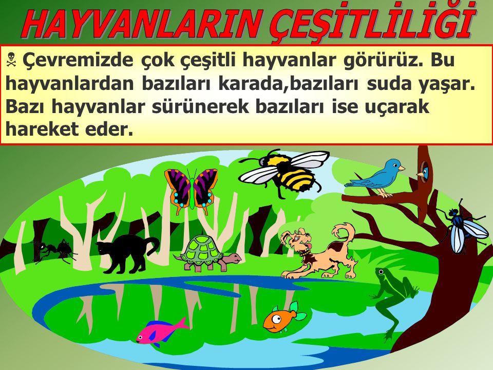  Çevremizde çok çeşitli hayvanlar görürüz. Bu hayvanlardan bazıları karada,bazıları suda yaşar. Bazı hayvanlar sürünerek bazıları ise uçarak hareket