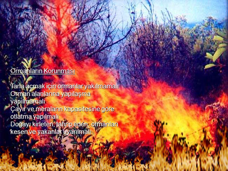Ormanların Korunması Tarla açmak için ormanlar yakılmamalı Orman alanlarına yapılaşma yapılmamalı Çayır ve meraların kapasitesine göre otlatma yapılmalı Doğayı kirleten, tahrip eden, ormanları kesen ve yakanlar uyarılmalı