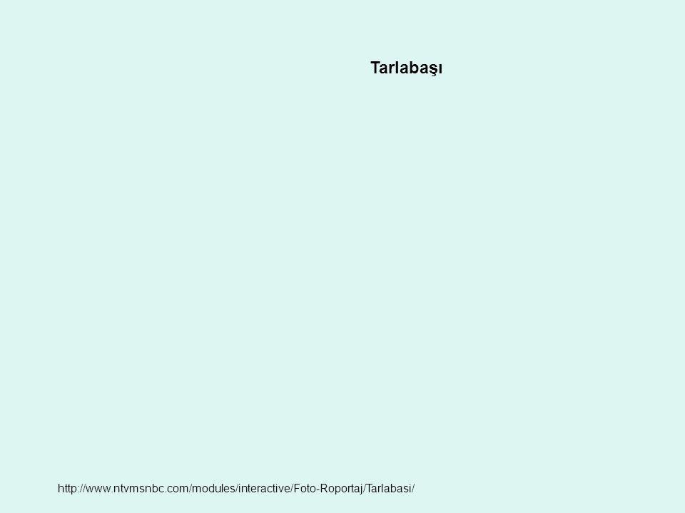 Tarlabaşı http://www.ntvmsnbc.com/modules/interactive/Foto-Roportaj/Tarlabasi/