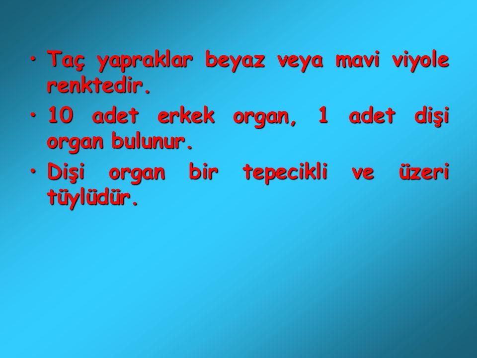 Taç yapraklar beyaz veya mavi viyole renktedir.Taç yapraklar beyaz veya mavi viyole renktedir. 10 adet erkek organ, 1 adet dişi organ bulunur.10 adet