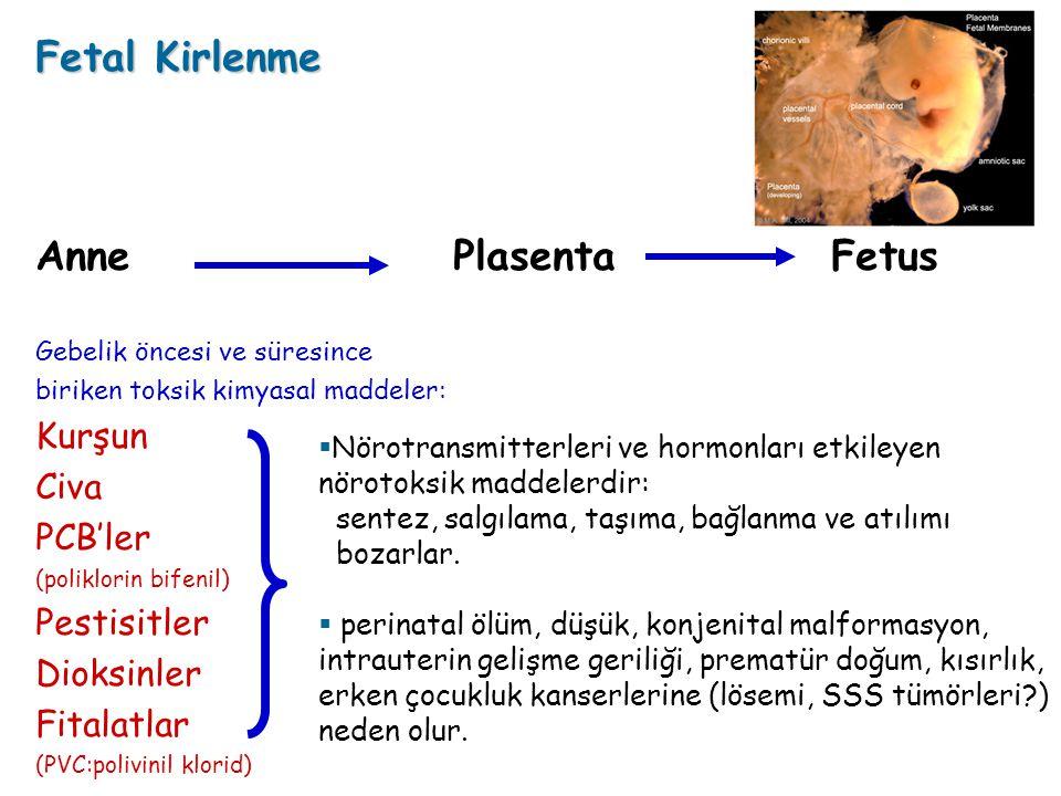 Fetal Kirlenme Anne Plasenta Fetus Gebelik öncesi ve süresince biriken toksik kimyasal maddeler: Kurşun Civa PCB'ler (poliklorin bifenil) Pestisitler Dioksinler Fitalatlar (PVC:polivinil klorid)  Nörotransmitterleri ve hormonları etkileyen nörotoksik maddelerdir: sentez, salgılama, taşıma, bağlanma ve atılımı bozarlar.