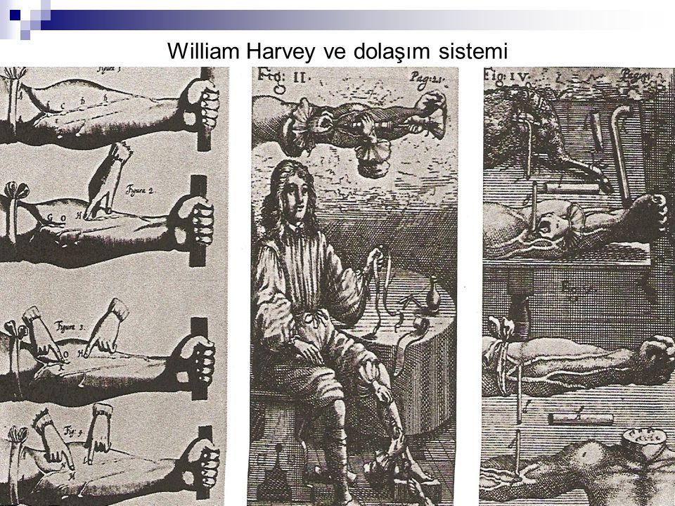 William Harvey ve dolaşım sistemi