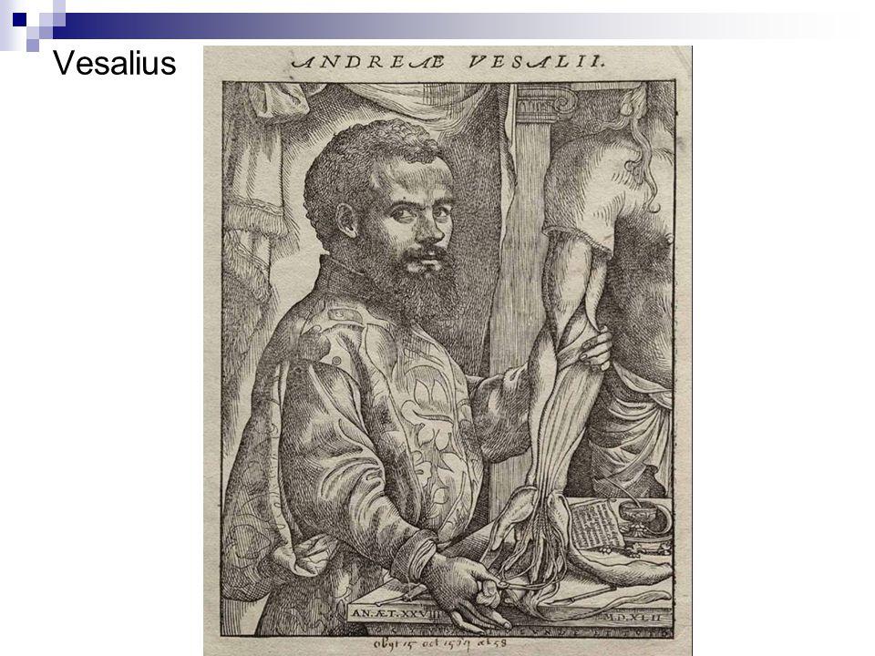 Vesalius