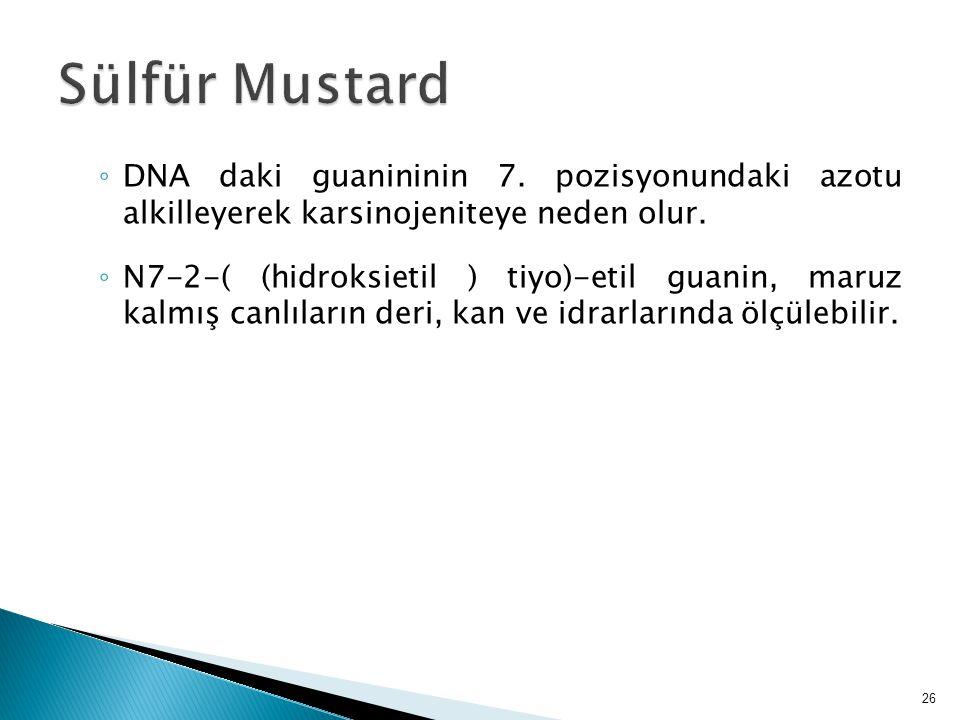 ◦ DNA daki guanininin 7. pozisyonundaki azotu alkilleyerek karsinojeniteye neden olur. ◦ N7-2-( (hidroksietil ) tiyo)-etil guanin, maruz kalmış canlıl
