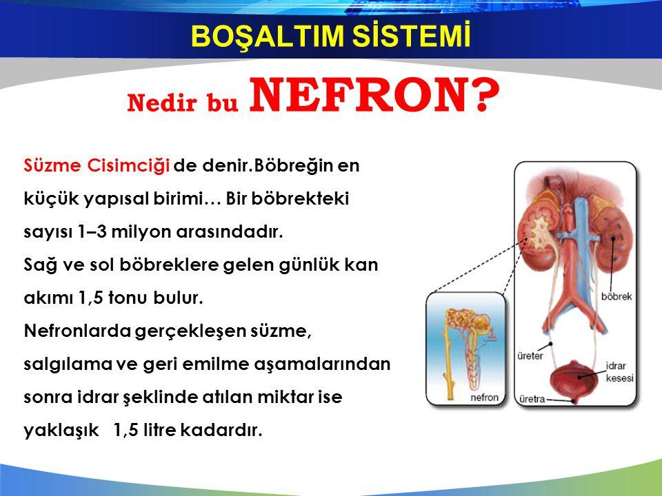 Nedir bu NEFRON? Süzme Cisimciği de denir.Böbreğin en küçük yapısal birimi… Bir böbrekteki sayısı 1–3 milyon arasındadır. Sağ ve sol böbreklere gelen