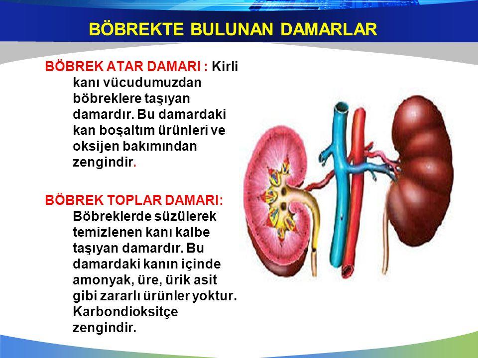 BÖBREKTE BULUNAN DAMARLAR BÖBREK ATAR DAMARI : Kirli kanı vücudumuzdan böbreklere taşıyan damardır. Bu damardaki kan boşaltım ürünleri ve oksijen bakı