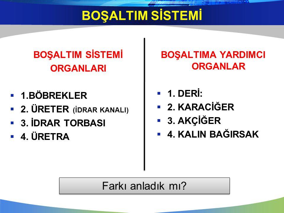 BOŞALTIMA YARDIMCI ORGANLAR  1.