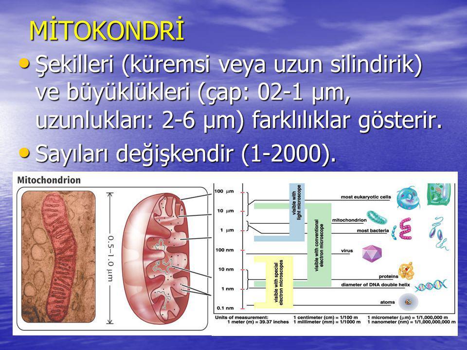 Oluşan oksijen radikalinin ETZ de başlıca iki kaynağı vardır.