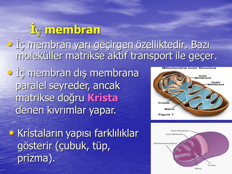 Serbest Radikaller Serbest Radikaller Radikal olmayan bir atom veya molekülden bir elektron çıkmasıyla veya bir elektron ilavesiyle oluşurlar
