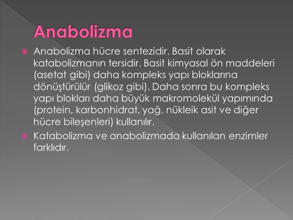  Anabolizma hücre sentezidir. Basit olarak katabolizmanın tersidir. Basit kimyasal ön maddeleri (asetat gibi) daha kompleks yapı bloklarına dönüştürü