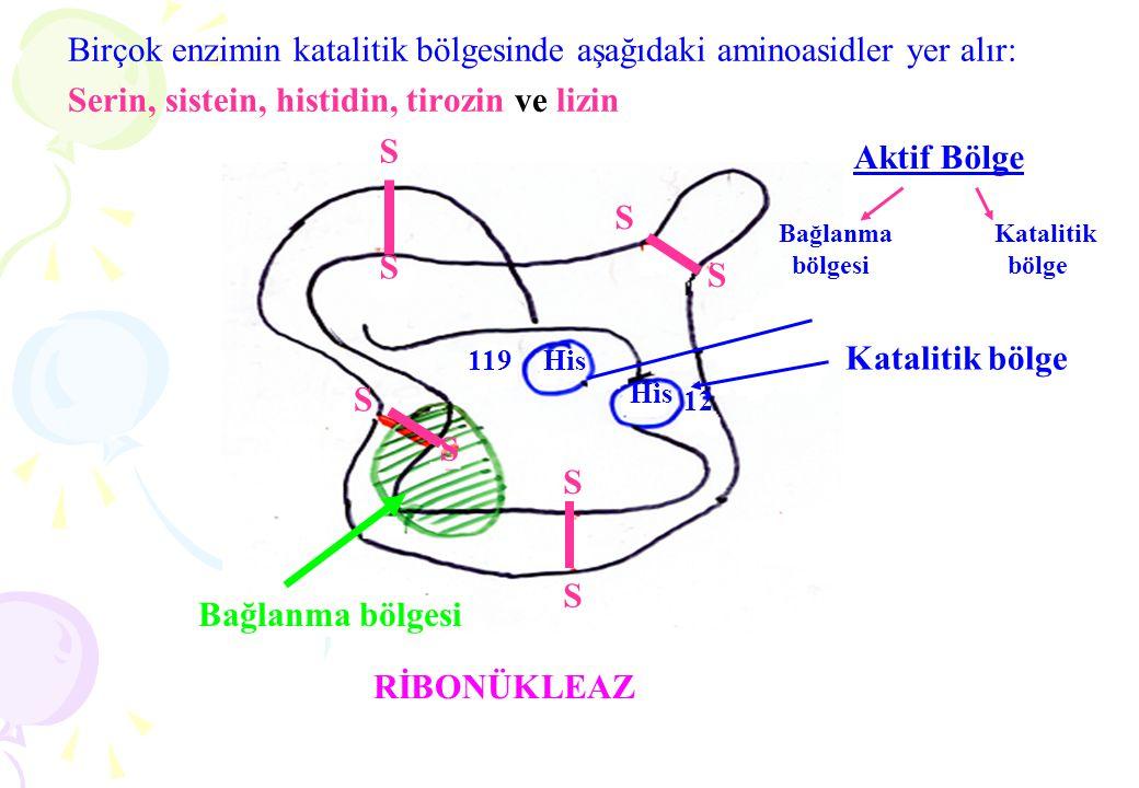 Birçok enzimin katalitik bölgesinde aşağıdaki aminoasidler yer alır: Serin, sistein, histidin, tirozin ve lizin His 119 12 Katalitik bölge S S S S S S