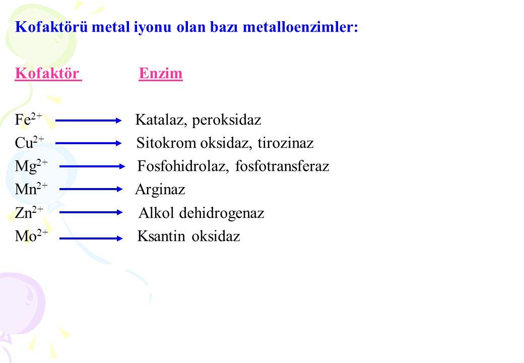 Kofaktörü metal iyonu olan bazı metalloenzimler: Kofaktör Enzim Fe 2+ Katalaz, peroksidaz Cu 2+ Sitokrom oksidaz, tirozinaz Mg 2+ Fosfohidrolaz, fosfo
