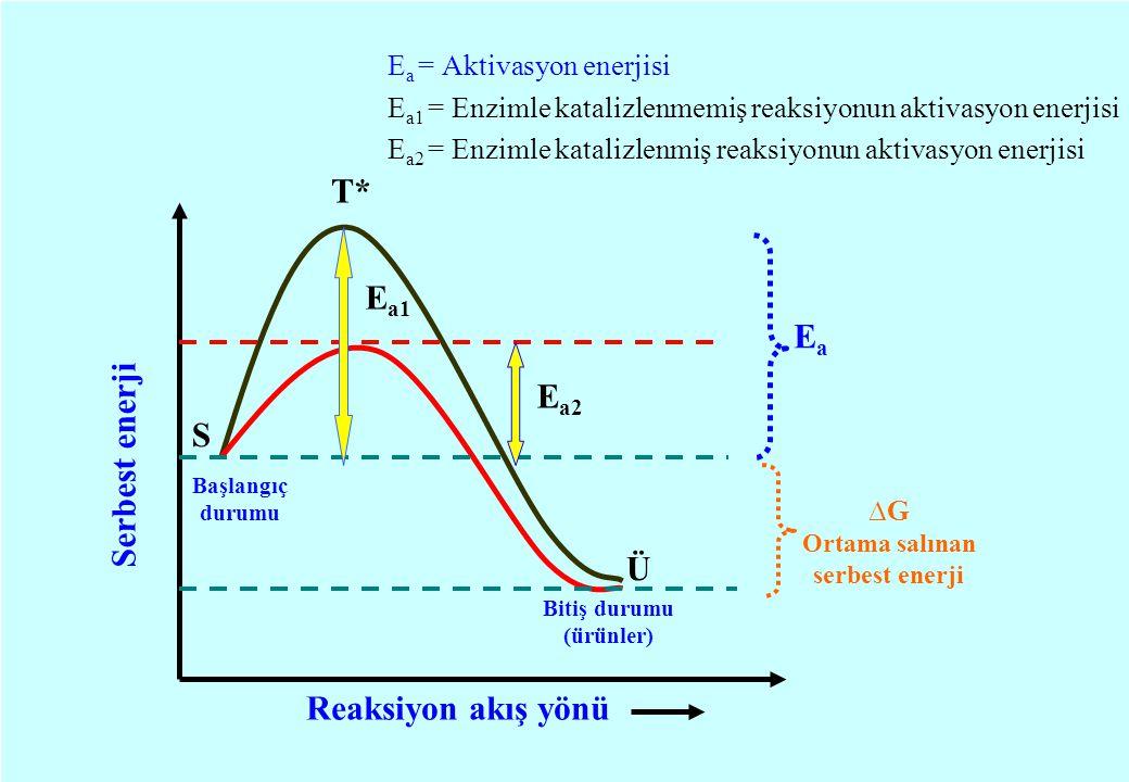E a = Aktivasyon enerjisi E a1 = Enzimle katalizlenmemiş reaksiyonun aktivasyon enerjisi E a2 = Enzimle katalizlenmiş reaksiyonun aktivasyon enerjisi