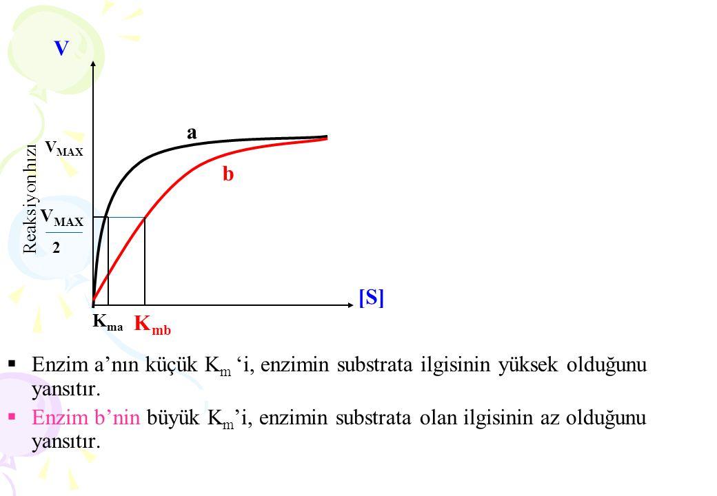  Enzim a'nın küçük K m 'i, enzimin substrata ilgisinin yüksek olduğunu yansıtır.  Enzim b'nin büyük K m 'i, enzimin substrata olan ilgisinin az oldu