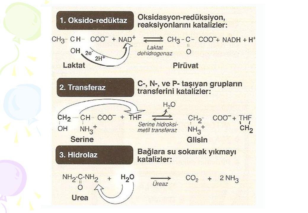 E a = Aktivasyon enerjisi E a1 = Enzimle katalizlenmemiş reaksiyonun aktivasyon enerjisi E a2 = Enzimle katalizlenmiş reaksiyonun aktivasyon enerjisi E a1 E a2 Ü S Başlangıç durumu Bitiş durumu (ürünler) EaEa ∆G Ortama salınan serbest enerji T* Serbest enerji Reaksiyon akış yönü