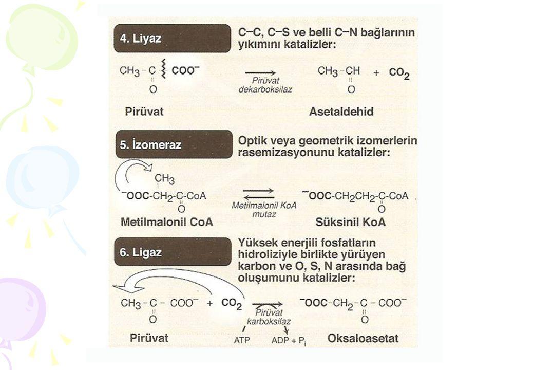 Sistematik İsimlendirme: ATP + D-Glukoz ADP + D-Glukoz-6-Fosfat Önerilen kısa isim: Hekzokinaz Enzim kodu : EC (2.7.1.1) Sistematik isim : ATP: glukoz fosfotransferaz EC (2.7.1.1): İlk sayı: Reaksiyon tipini açıklar (Major sınıf) Transferaz sınıfı İkinci sayı: Alt sınıf Fosfotransferaz Üçüncü sayı:Alt alt sınıf Hidroksil grubunun alıcı olduğu fosfotransferaz Dördüncü sayı:Enzim için spesifiktir.