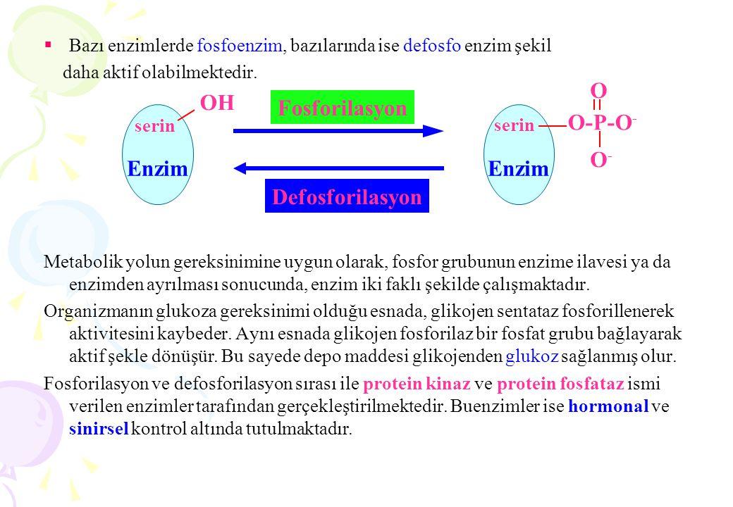  Bazı enzimlerde fosfoenzim, bazılarında ise defosfo enzim şekil daha aktif olabilmektedir. Metabolik yolun gereksinimine uygun olarak, fosfor grubun