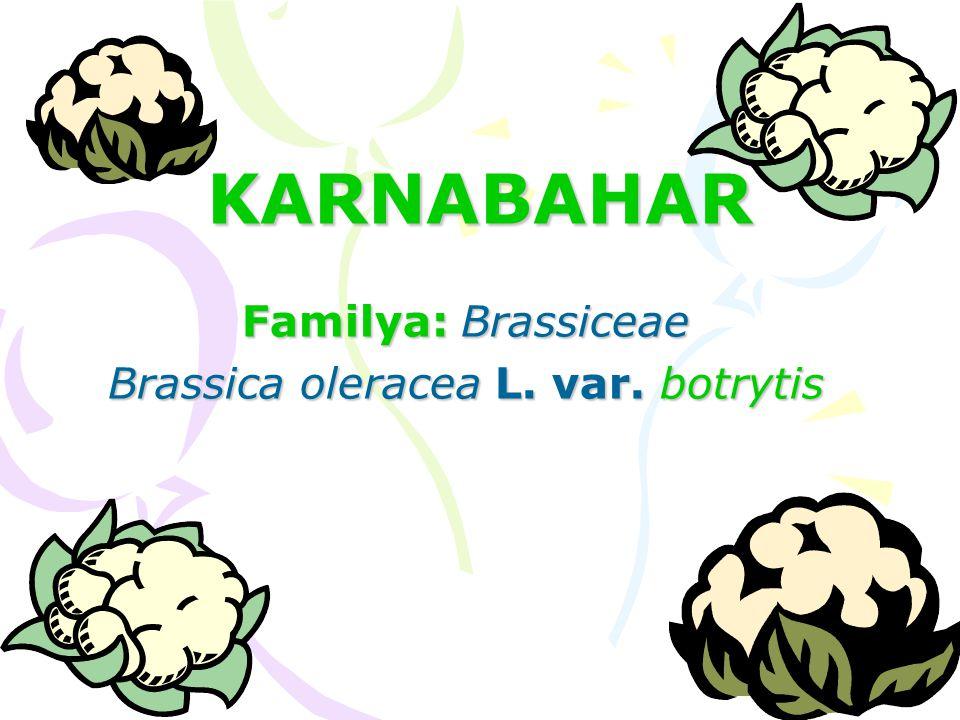 KARNABAHAR Familya: Brassiceae Brassica oleracea L. var. botrytis