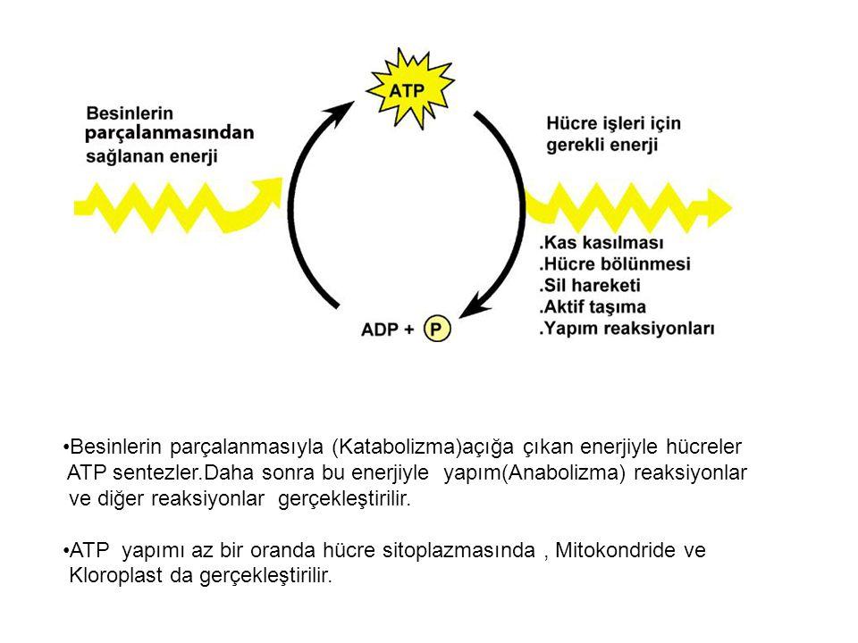 Besinlerin parçalanmasıyla (Katabolizma)açığa çıkan enerjiyle hücreler ATP sentezler.Daha sonra bu enerjiyle yapım(Anabolizma) reaksiyonlar ve diğer reaksiyonlar gerçekleştirilir.