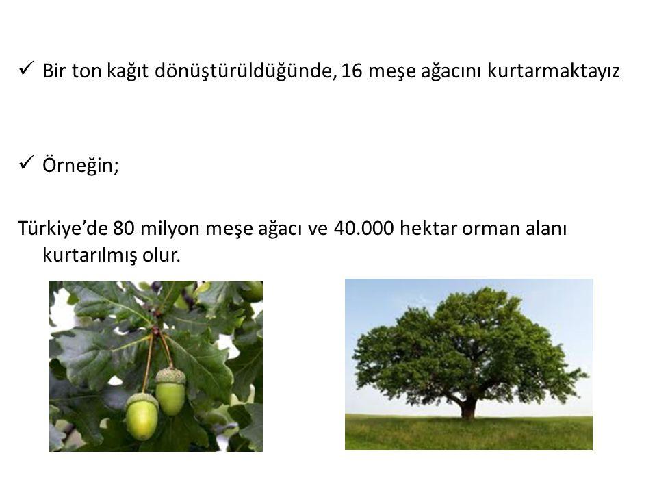 Bir ton kağıt dönüştürüldüğünde, 16 meşe ağacını kurtarmaktayız Örneğin; Türkiye'de 80 milyon meşe ağacı ve 40.000 hektar orman alanı kurtarılmış olur
