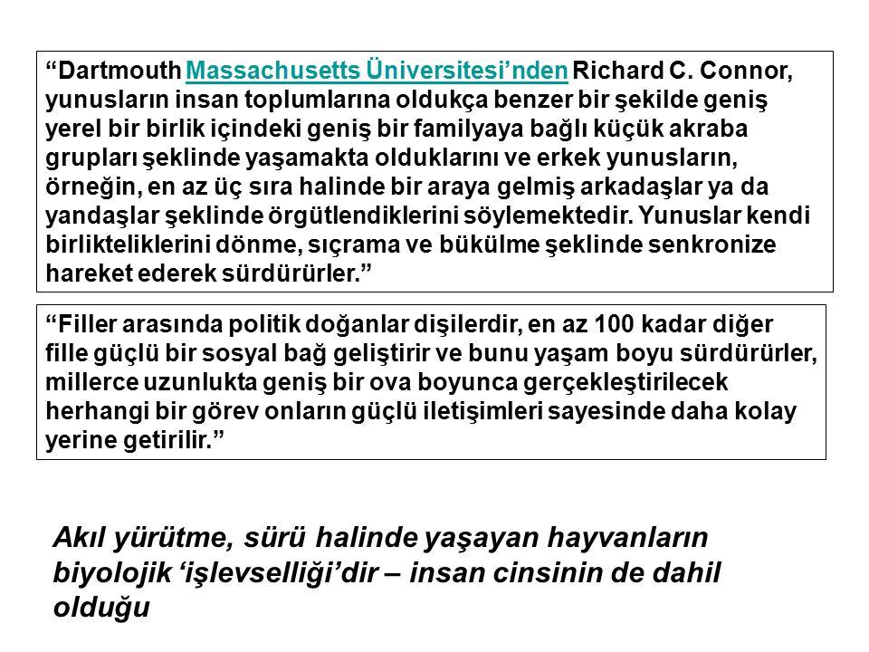 """""""Dartmouth Massachusetts Üniversitesi'nden Richard C. Connor, yunusların insan toplumlarına oldukça benzer bir şekilde geniş yerel bir birlik içindeki"""