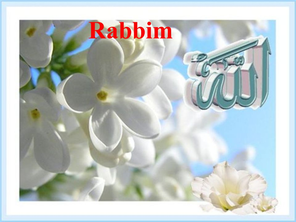 143 Rabbim