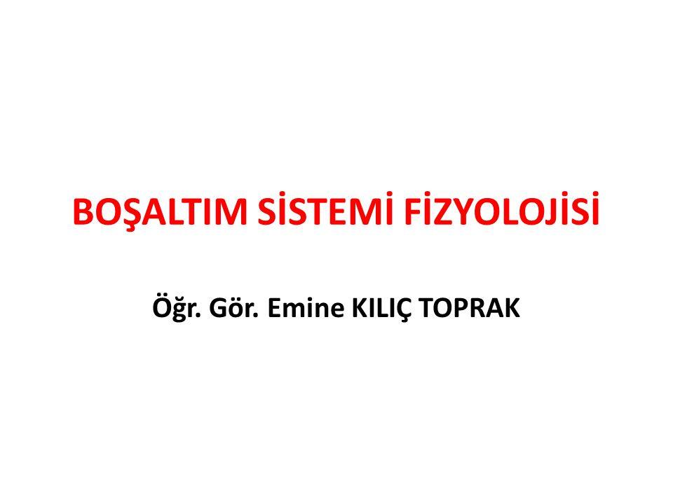 GFH'nin Hormonal Düzenlenmesi: Renin ve atrial natriüretik peptit GFH'yi düzenler.
