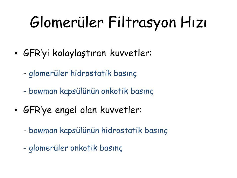 Glomerüler Filtrasyon Hızı Böbreklerin bir dakikada ürettiği filtrat miktarına glomerüler filtrasyon hızı (GFH) denir. Ortalama GFH da 125 ml/dakika k