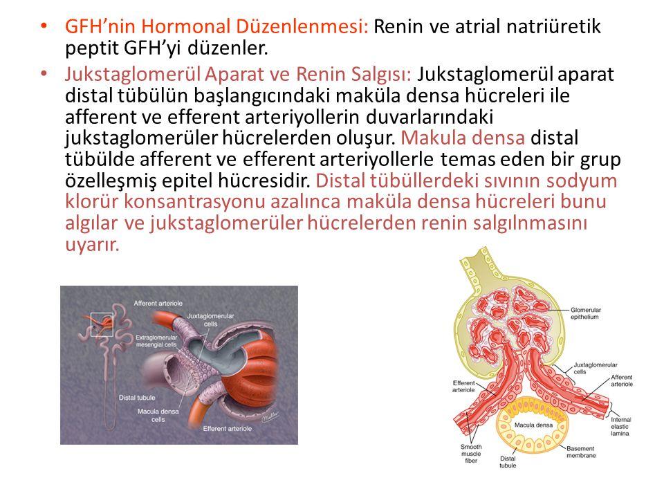 GFH'nin Otoregülasyonu: Nefron, afferent arteriollerin, efferent arteriollerin ve glomerül kılcallarının çapını değiştirerek önemli ölçüde otoregülasy