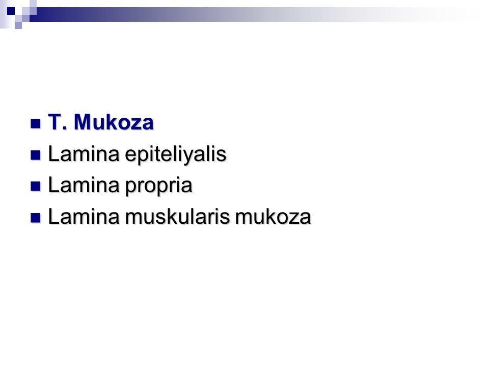 T.Mukoza T.