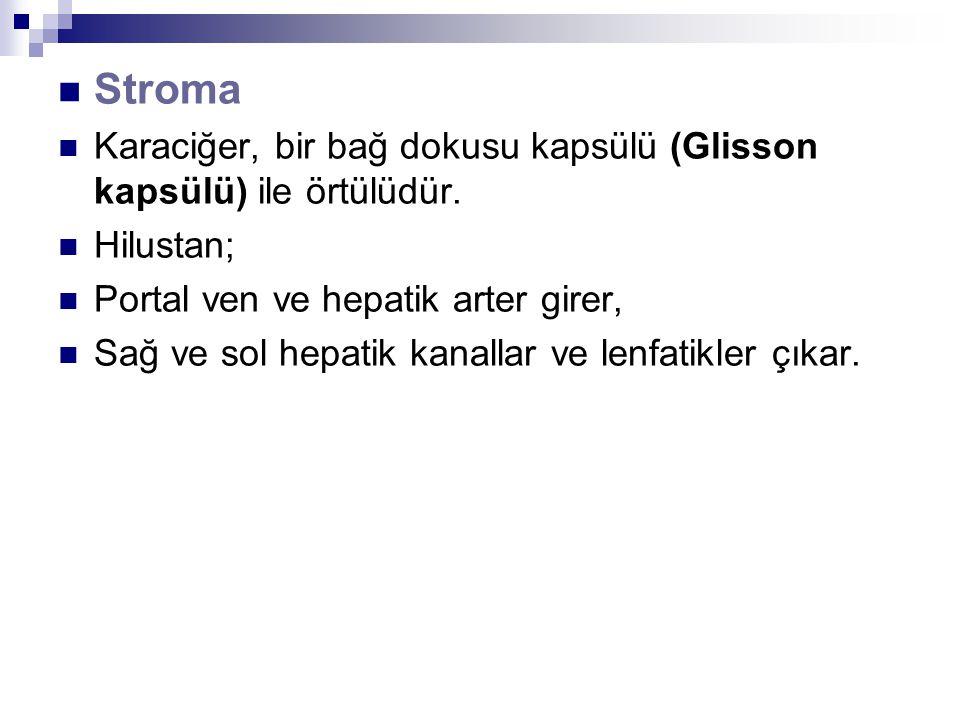 Stroma Karaciğer, bir bağ dokusu kapsülü (Glisson kapsülü) ile örtülüdür.