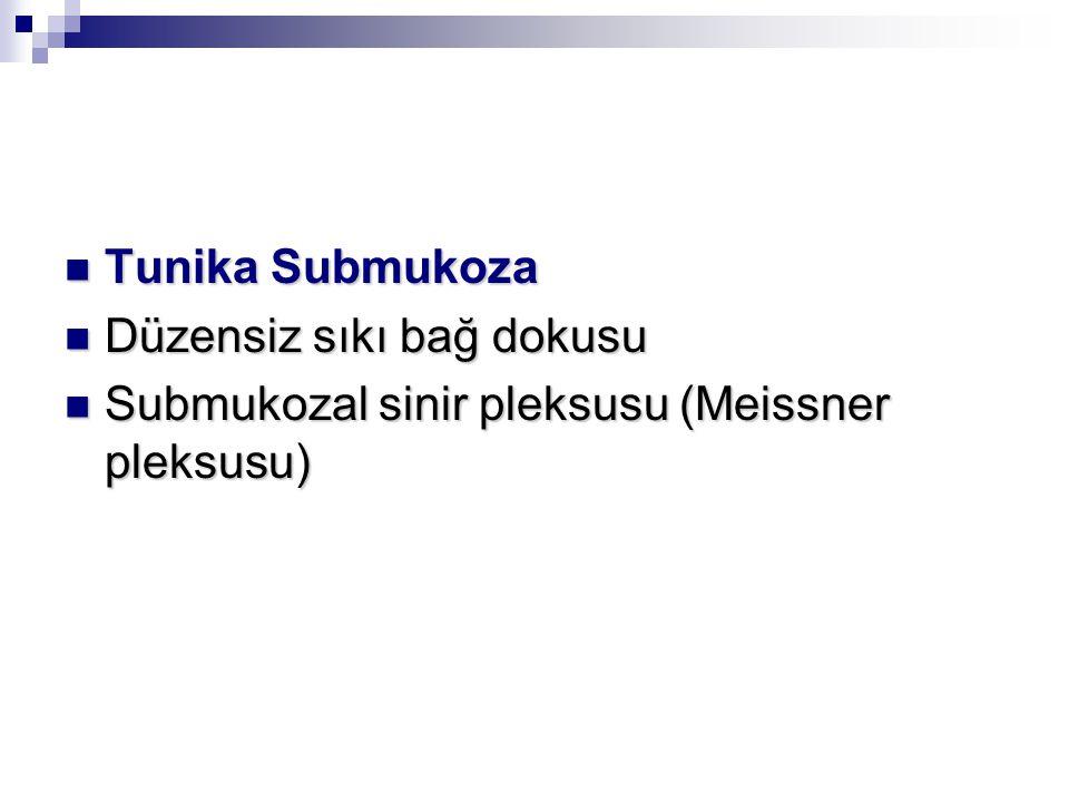 Tunika Submukoza Tunika Submukoza Düzensiz sıkı bağ dokusu Düzensiz sıkı bağ dokusu Submukozal sinir pleksusu (Meissner pleksusu) Submukozal sinir pleksusu (Meissner pleksusu)