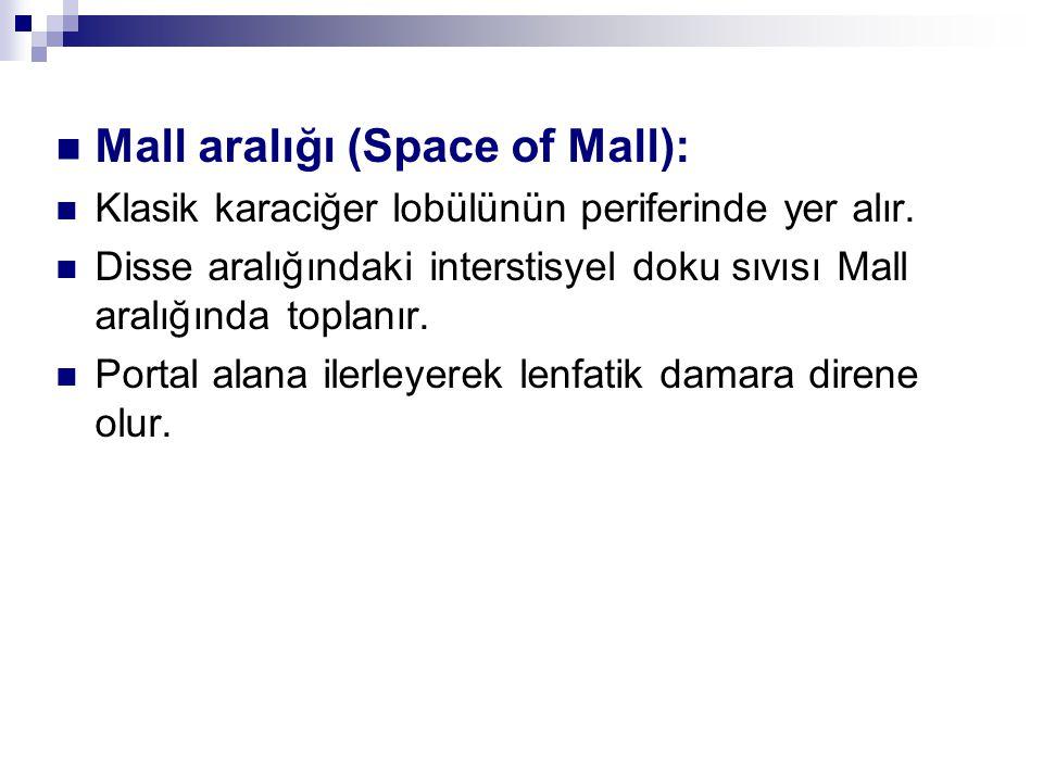 Mall aralığı (Space of Mall): Klasik karaciğer lobülünün periferinde yer alır.