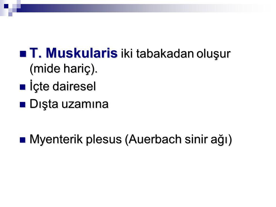 T.Muskularis iki tabakadan oluşur (mide hariç). T.