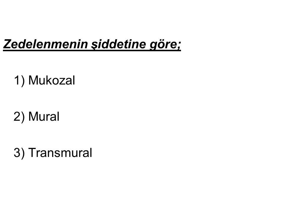Zedelenmenin şiddetine göre; 1) Mukozal 2) Mural 3) Transmural