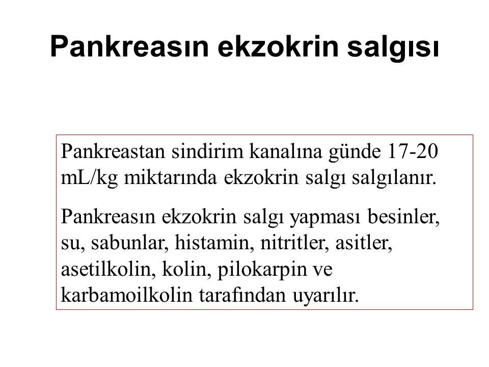 Pankreasın ekzokrin salgısı Pankreastan sindirim kanalına günde 17-20 mL/kg miktarında ekzokrin salgı salgılanır.