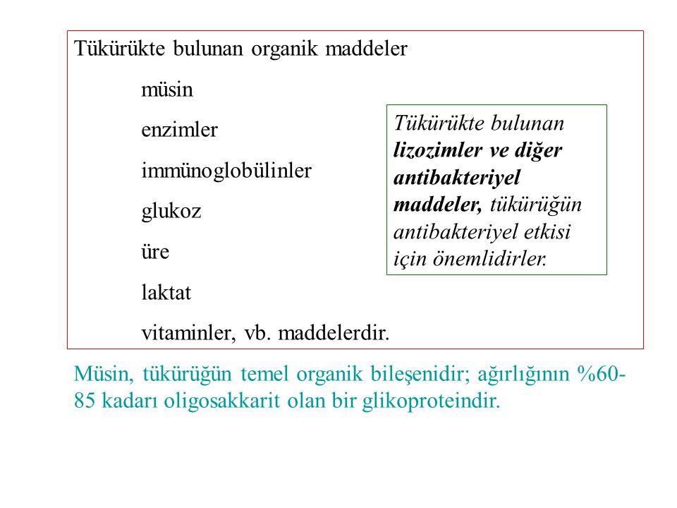 Tükürükte bulunan enzimler amilaz, karbonik anhidraz, lingual lipaz, fosfataz, kallikrein enzimleridir.
