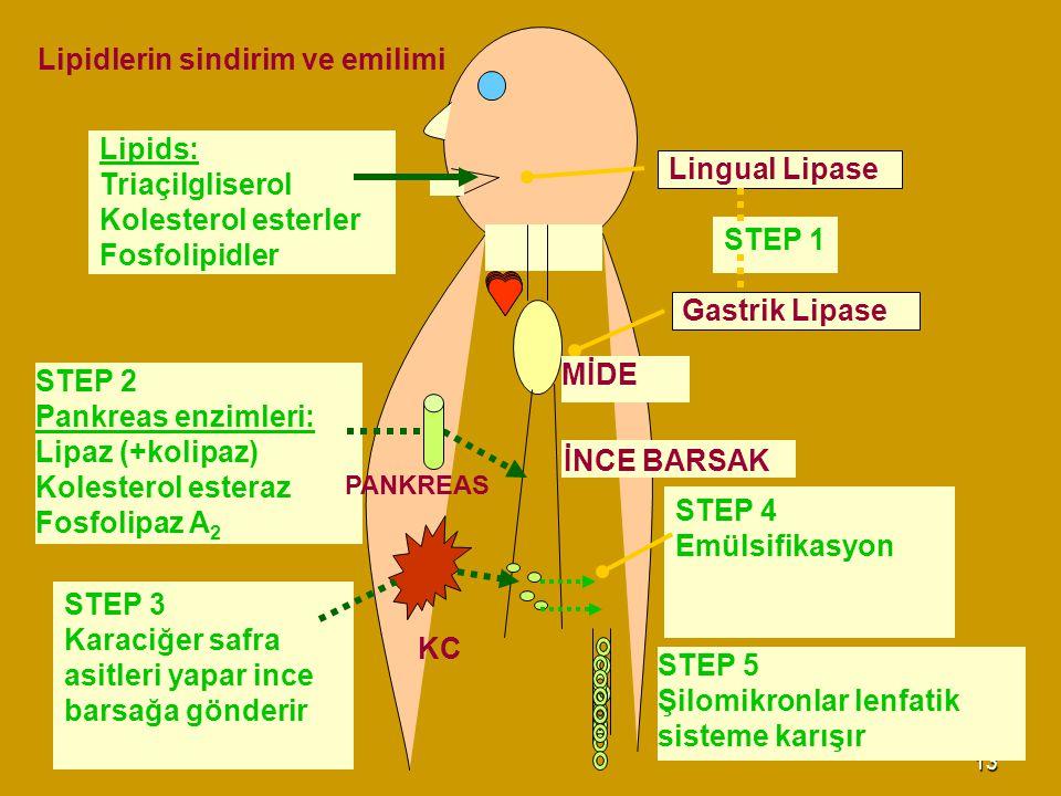 13 STEP 3 Karaciğer safra asitleri yapar ince barsağa gönderir STEP 2 Pankreas enzimleri: Lipaz (+kolipaz) Kolesterol esteraz Fosfolipaz A 2 Lipids: T