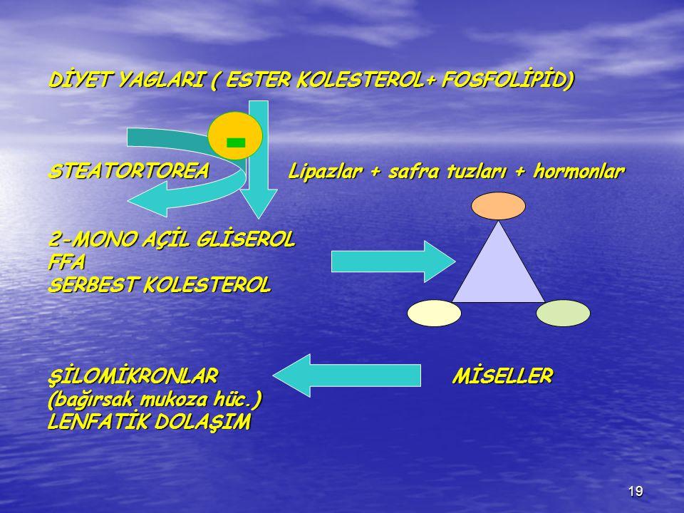19 DİYET YAGLARI ( ESTER KOLESTEROL+ FOSFOLİPİD) STEATORTOREA Lipazlar + safra tuzları + hormonlar 2-MONO AÇİL GLİSEROL FFA SERBEST KOLESTEROL ŞİLOMİK