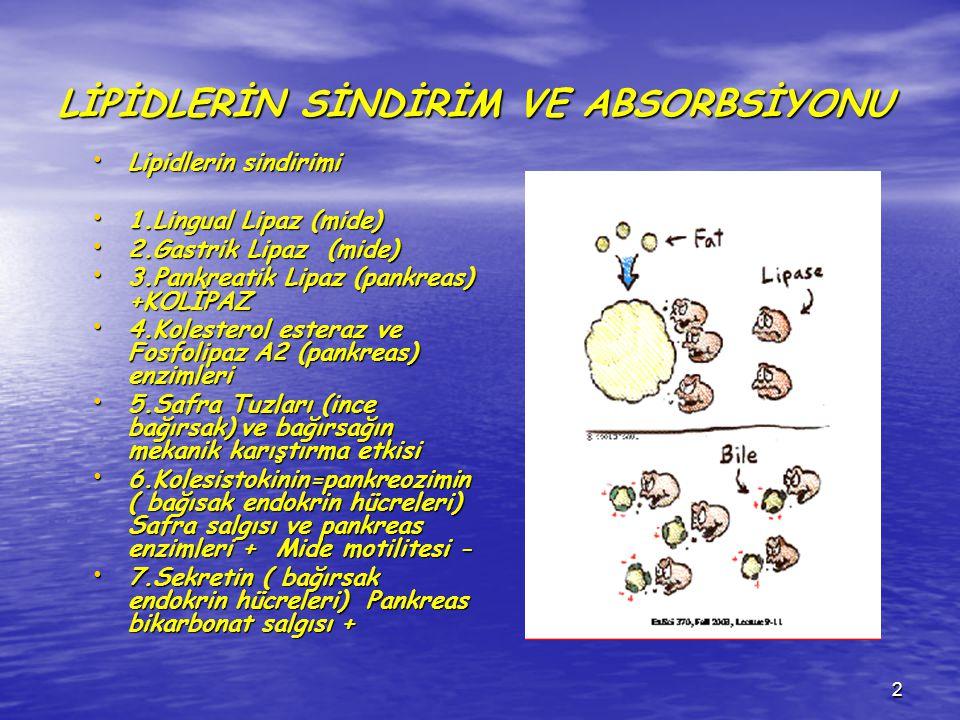 2 LİPİDLERİN SİNDİRİM VE ABSORBSİYONU Lipidlerin sindirimi Lipidlerin sindirimi 1.Lingual Lipaz (mide) 1.Lingual Lipaz (mide) 2.Gastrik Lipaz (mide) 2